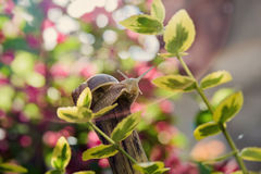 Macro Snail in garden among yellow leaves Royalty Free Stock Photo