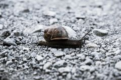 Macro of a snail in New Zealand stock photos