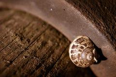 Macro snail Royalty Free Stock Photo