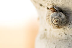 Macro snail. Macro of snail sleeping on a rock with space for text (horizontal version Royalty Free Stock Photo