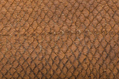 Macro of snake leather Royalty Free Stock Image
