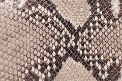 Macro of snake leather Stock Photos