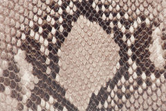 Macro of snake leather Stock Images