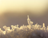 Macro of snow. With crystals Stock Image