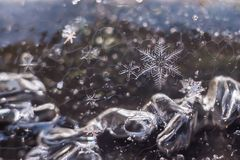 Macro of Snowflakes, frozen in ice. Real snowflakes, frozen in the ice! Great beauty of nature royalty free stock photo