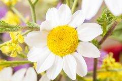 Macro of some flowers in spring Royalty Free Stock Photo