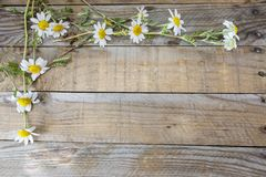 Macro of some flowers in spring. Macro of white flowers in spring on a wooden table Stock Image