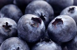 Fresh blueberries. Macro of some newly harvested fresh blueberries Stock Image
