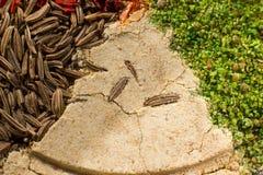 Macro spezie variopinte messe con differenti spezie Fotografia Stock Libera da Diritti