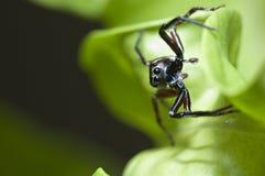 Macro Spider Stock Photos