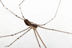 Macro of a spider Stock Image