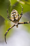 Macro spider Stock Images