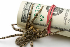 Macro of spider behind dollars roll Stock Photo