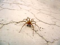 Macro spider. A macro image of a spider on a cracked wall Stock Images