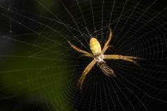Macro spider nests Stock Image