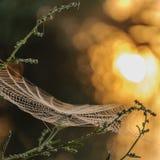 Macro spider net 1 stock photography