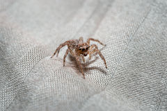 Macro spider portrait Royalty Free Stock Images