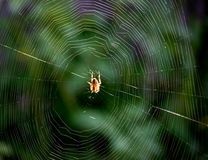 Macro. Spider webs, & cute yellow spider royalty free stock photos