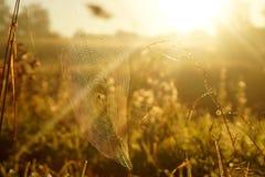 Macro spiderweb Stock Image