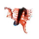 Macro spot red, black blotch texture isolated on Stock Photo
