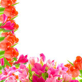 Macro spring beautiful flowers Stock Photography