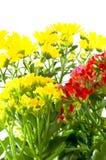 Macro spring beautiful flowers. Stock Photography