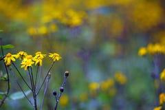 Macro Springtime Wildflowers Stock Photo