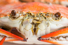 Macro steamed crab on dish Royalty Free Stock Photography