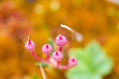 Macro stone vegetation polar leaf summer Royalty Free Stock Images