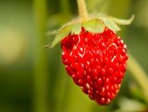 Macro strawberrie Royalty Free Stock Image
