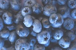 Macro struttura dei bluberries freschi e maturi immagini stock libere da diritti