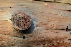Macro struttura del fondo del ceppo dell'albero Fotografia Stock Libera da Diritti
