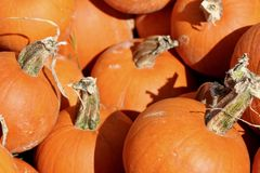 Macro struttura del fondo delle zucche arancio Fotografia Stock Libera da Diritti