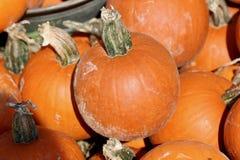 Macro struttura del fondo delle zucche arancio Immagini Stock Libere da Diritti