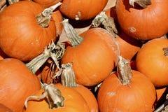 Macro struttura del fondo delle zucche arancio Fotografia Stock