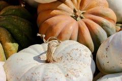 Macro struttura del fondo delle zucche arancio, bianche e verdi Immagine Stock