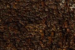 Macro struttura del fondo di struttura della corteccia del pino immagini stock
