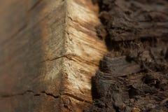 Macro struttura di legno - 3 immagine stock libera da diritti