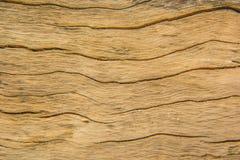 Macro struttura di legno - 4 fotografie stock libere da diritti