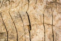 Macro struttura di legno - 5 fotografia stock