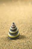 Macro studio shot of beautiful sea shell Royalty Free Stock Images