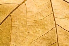 Macro sul foglio strutturato di colore marrone di autunno Fotografia Stock