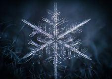 Macro symétrie de plan rapproché de flocon de neige congelée Image libre de droits