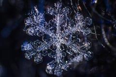 Macro symétrie de plan rapproché de flocon de neige congelée Images stock