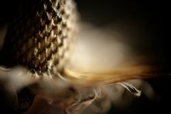 Macro tête abstraite de graine de centrale Photos stock