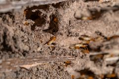Close up of termites royalty free stock photography