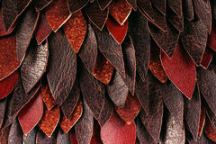 Macro texture of brown leather leaves Royalty Free Stock Image
