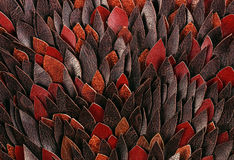 Macro texture of brown leather petals Royalty Free Stock Image