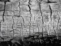 Macro texture of charcoal Stock Image