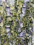 Macro texture d'écorce d'arbre images libres de droits